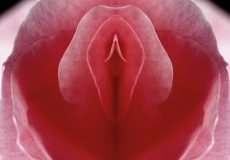 Vulva Facts